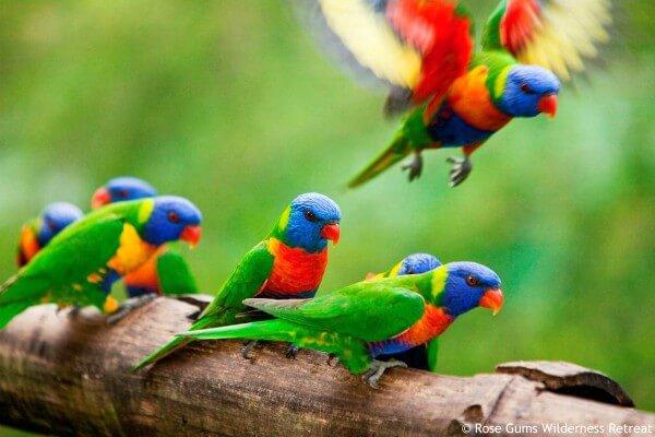 Atherton Tablelands, Rosegums Retreat , rondreis Australië - opDroomreis.nu (3)