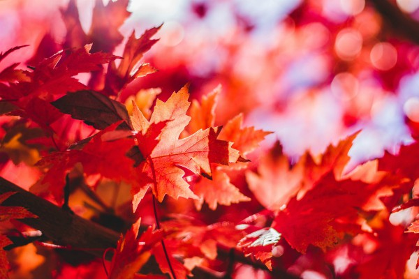 Fall Red Colors, Indian Summer New England, rondreis Amerika - opDroomreis.nu