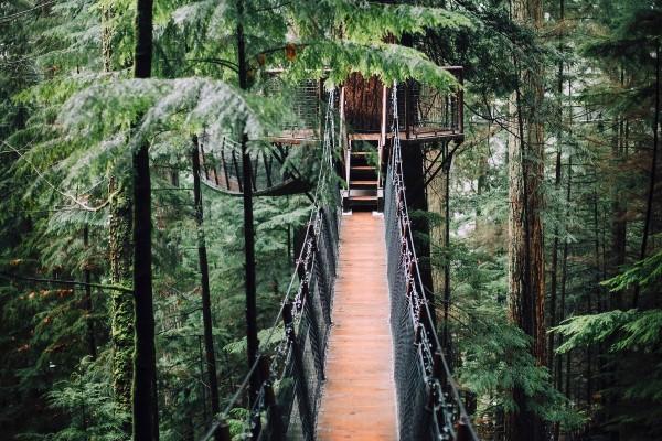 Vancouver, regenwoud, rondreis West-Canada - opDroomreis.nu