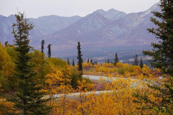Glenn Highway, in fall, rondreis Alaska en Yukon - opDroomreis.nu