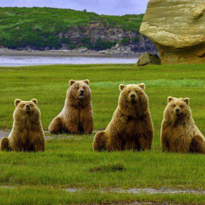 Katmai NP, beren   Reisverhalen Alaska   lees ervaringen van anderen   opDroomreis.nu
