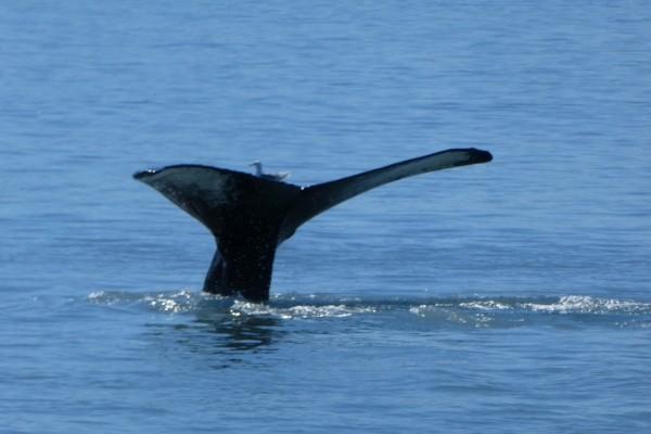 Seward walvistocht   Reisverhalen Alaska   lees ervaringen van anderen   opDroomreis.nu