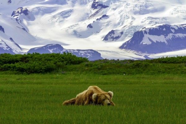 Katmai NP, bear viewing   Reisverhalen Alaska   lees ervaringen van anderen   opDroomreis.nu
