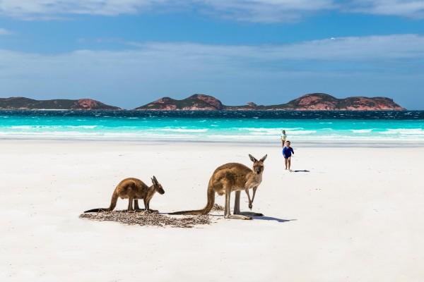Cape Le Grand, Lucky Bay, kangoeroe - rondreis Australië, opDroomreis.nu