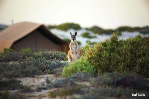 Exmouth, Sal Salis, friendly neighbors - rondreis Australië, opDroomreis.nu