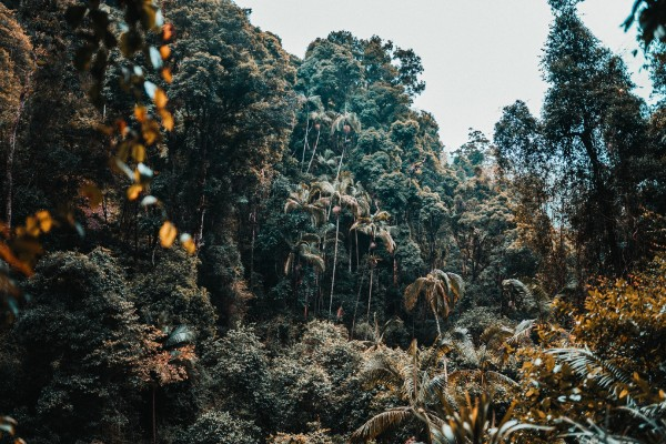 Springbrook NP, palmbomen - rondreis Australië, opDroomreis.nu