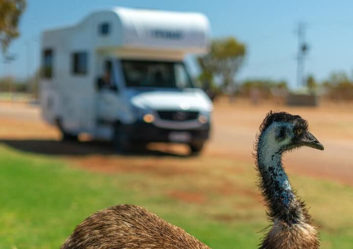 Camperreis, Maui, Emu's - rondreis Australië, opDroomreis.nu